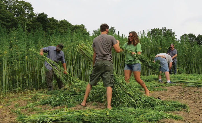 Viewpoint on Organic Hemp: a potential alternative to GMO crops?