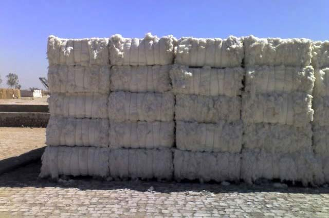 I am an organic cotton bale