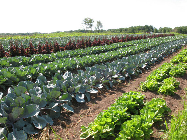 U.S. organic acreage tops 5.3 million